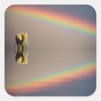 Elephant, water, and rainbow, Kenya Square Sticker