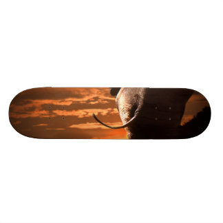 Elephant with Sunset 18.1 Cm Old School Skateboard Deck