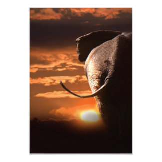 Elephant with Sunset 9 Cm X 13 Cm Invitation Card