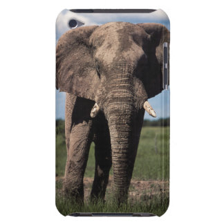 Elephant young male iPod touch cover