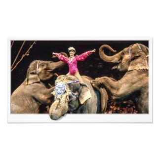 Elephants At The Circus Art Photo