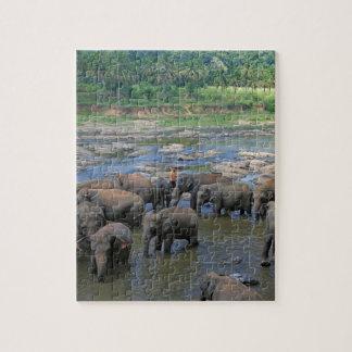 Elephants bathing in river Sri Lanka Jigsaw Puzzle