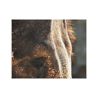 Elephants Emotion Canvas Print