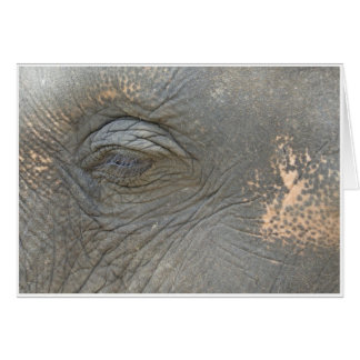 Elephant's Eye Card