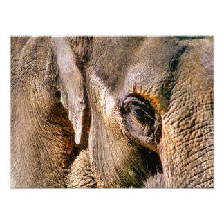 ELEPHANTS PHOTO ART