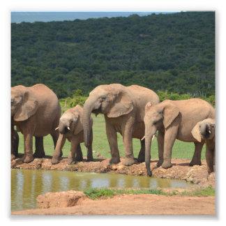 Elephants Photo Print