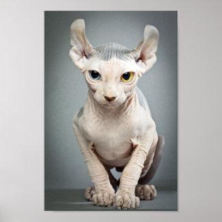 Elf Sphinx Cat Photograph Poster