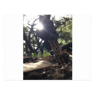Elfin Saddle Mushroom Postcard