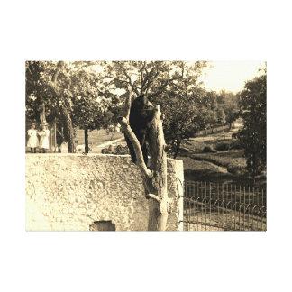 Elgin Illinois Lords Park 1890's Photograph Bear Canvas Print