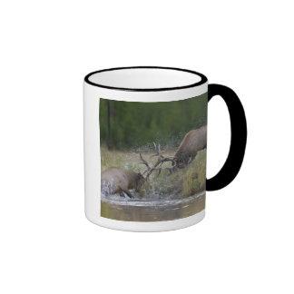 Elk Bulls fighting, Yellowstone NP, Wyoming Ringer Mug