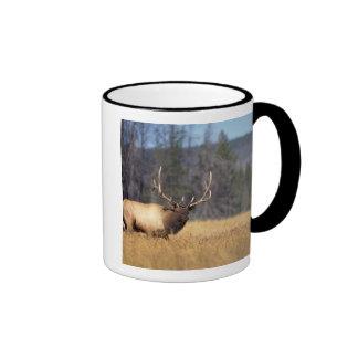 elk, Cervus elaphus, bull in a field in Ringer Mug