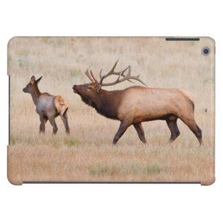 Elk (Cervus Elephus) Bull Herding Harem 2 iPad Air Cases
