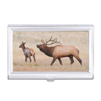 Elk (Cervus Elephus) Bull Herding Harem 2 Case For Business Cards