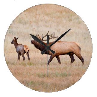 Elk (Cervus Elephus) Bull Herding Harem 2 Clock