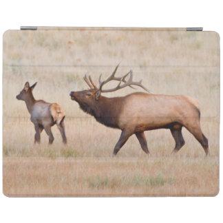 Elk (Cervus Elephus) Bull Herding Harem 2 iPad Cover