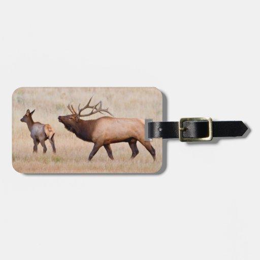 Elk (Cervus Elephus) Bull Herding Harem 2 Tag For Luggage
