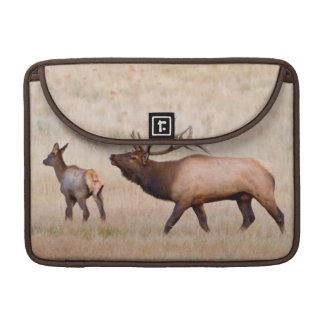 Elk (Cervus Elephus) Bull Herding Harem 2 MacBook Pro Sleeve