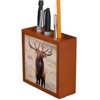 Elk (Cervus Elephus) Bull Herding Harem Desk Organiser
