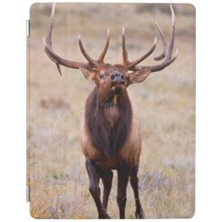 Elk (Cervus Elephus) Bull Herding Harem iPad Cover