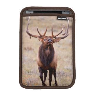 Elk (Cervus Elephus) Bull Herding Harem iPad Mini Sleeves