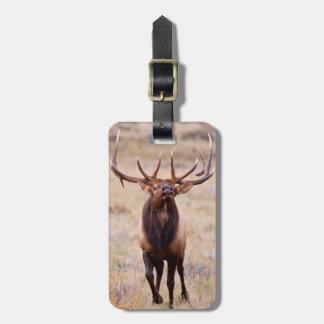 Elk (Cervus Elephus) Bull Herding Harem Travel Bag Tags
