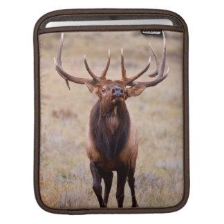 Elk (Cervus Elephus) Bull Herding Harem Sleeves For iPads