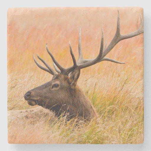 Elk (Cervus Elephus) Resting In Meadow Grass Stone Coaster