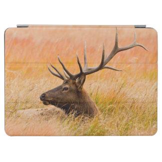 Elk (Cervus Elephus) Resting In Meadow Grass iPad Air Cover