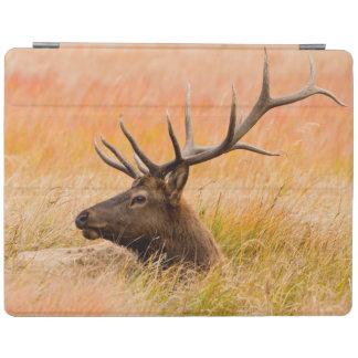 Elk (Cervus Elephus) Resting In Meadow Grass iPad Cover