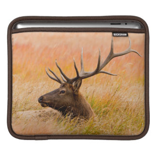 Elk (Cervus Elephus) Resting In Meadow Grass iPad Sleeve