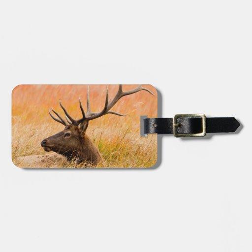Elk (Cervus Elephus) Resting In Meadow Grass Tag For Bags