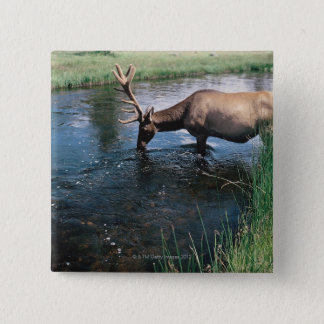 Elk drinking from stream , Yellowstone National 15 Cm Square Badge