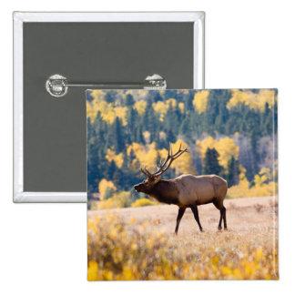 Elk in Rocky Mountain National Park, Colorado 15 Cm Square Badge