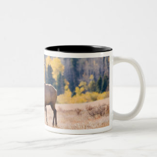 Elk in Rocky Mountain National Park, Colorado Two-Tone Mug