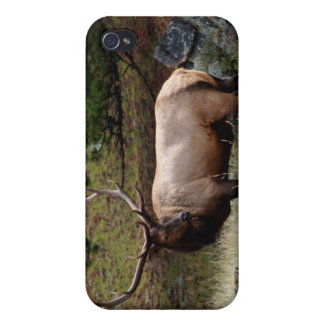 Elk in the Wild 4  Cases For iPhone 4