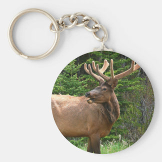 Elk in Velvet Unique Wildlife Gift Ideas Hunters Key Ring