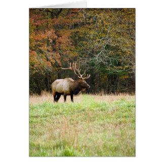 Elk Notecard