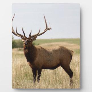 Elk on Canadian Prairies Plaque