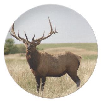 Elk on Canadian Prairies Plate