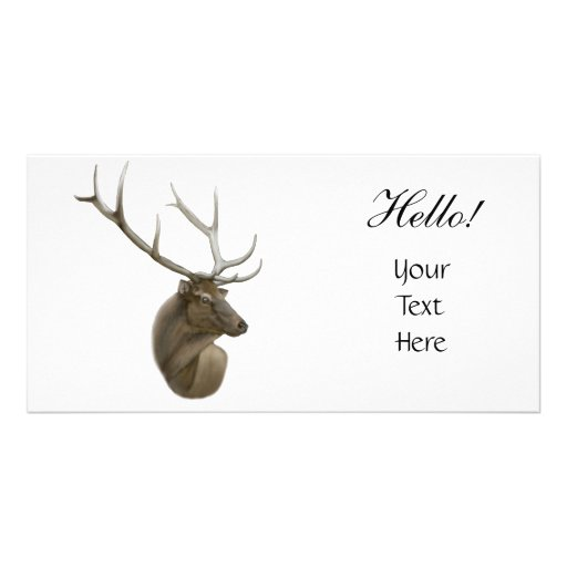 Elk Photo Card