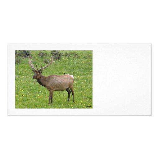 Elk Photocard Customized Photo Card