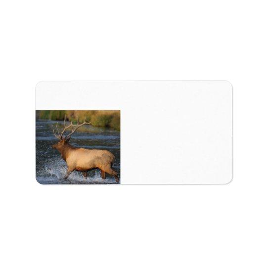 elk splashing in the water address label