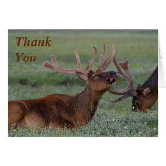 elk Thank You Note Card