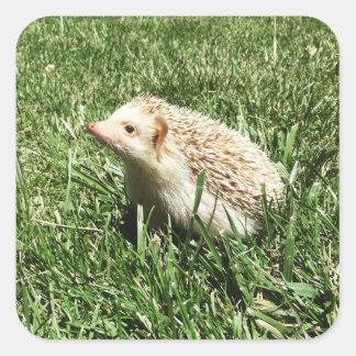 elliot the hedgehog sticker