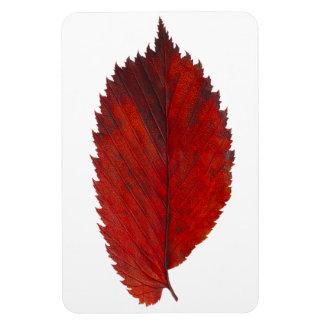 Elm autumn leaf rectangular photo magnet