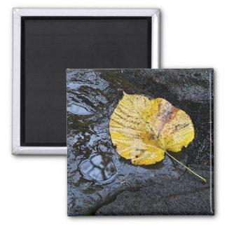 Elm Leaf Magnet