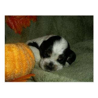 ELVIS , Blue roan &tan american cocker spaniel pup Postcard