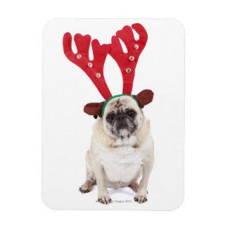 Embarrassed looking Pug wearing Reindeer Antlers Rectangular Photo Magnet