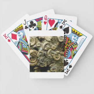 embedded snails fossils bicycle playing cards