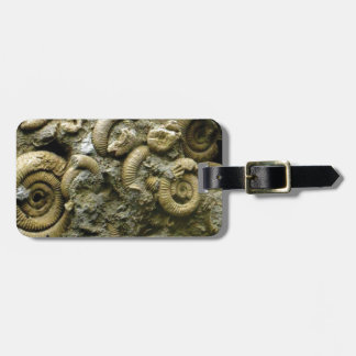 embedded snails fossils luggage tag
